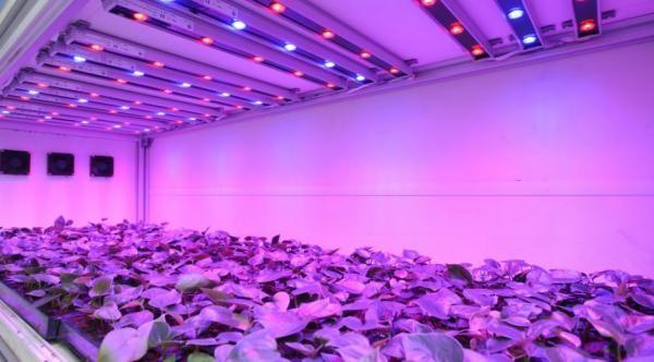 Реле такого вида применяются при выращивании растений с помощью искусственного света